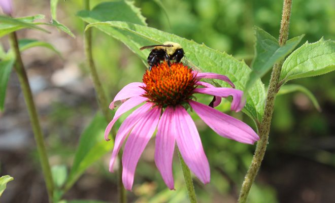 With most of the flowers in full bloom now, and the bees are enjoying the site.